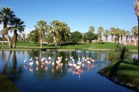 Lake with Flamingos, Villas in background