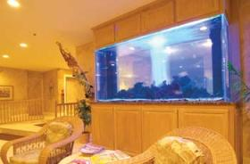 The Cove on Ormond Beach - 1,500 Gallon Aquarium
